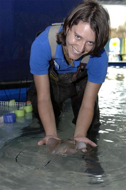 Florida_aquarium_baby_stingray_wi_4